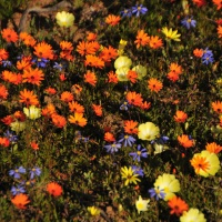 Birding and Flowers Trip - Part 2 : Port Nolloth and Namaqualand