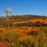 Port Nolloth & Namaqualand - Birding and Flowers