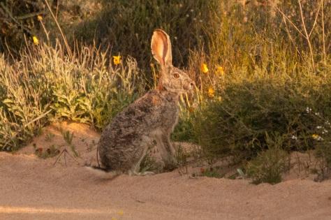 Cape Hare, Namaqua NP
