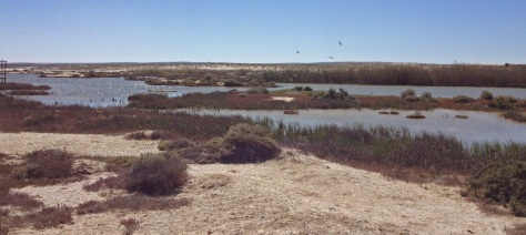 Port Nolloth Bird Sanctuary