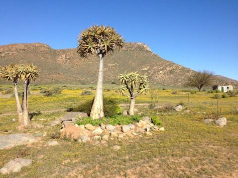 Quiver tree, No-Heep