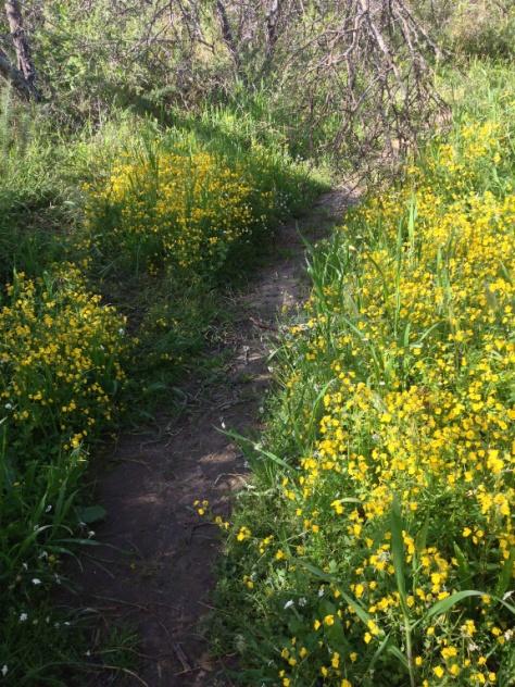 Pathway, Bontebok NP