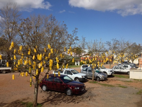 Swellendam - unique decorations (plastic bottles painted yellow)