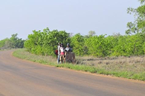 'Illegals' near Pafuri