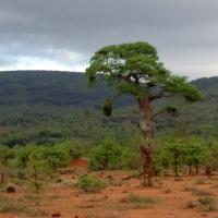 Punda Mania 2013 - Sizzling Hot Birding