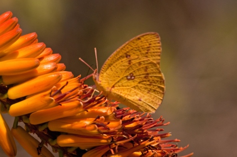 Butterfly in on the act