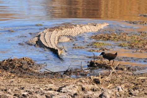 Croc and Crake
