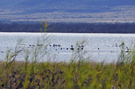 Camdeboo NP - Nqweba Dam
