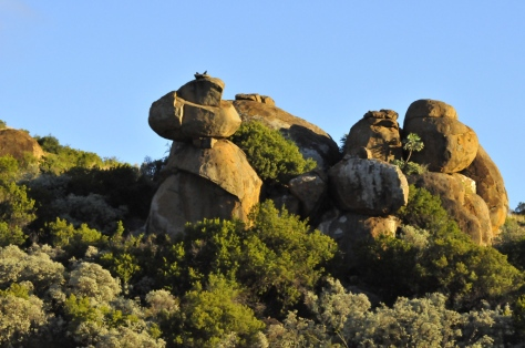 The rock formations are a feature of some parts of the park