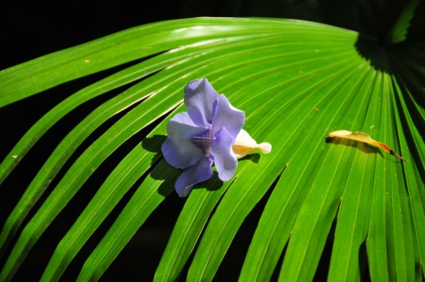 Fallen flower on a palm frond