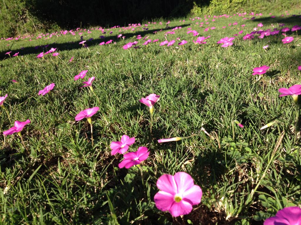 Poolside flowers, Addo NP