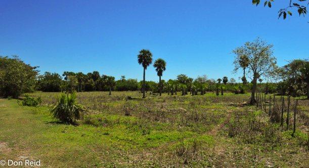 Open Savannah with palms
