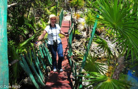 Geraldine braves a rickety bridge