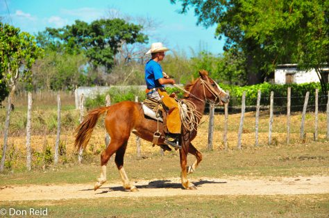 Cowboys are alive and well in Cuba