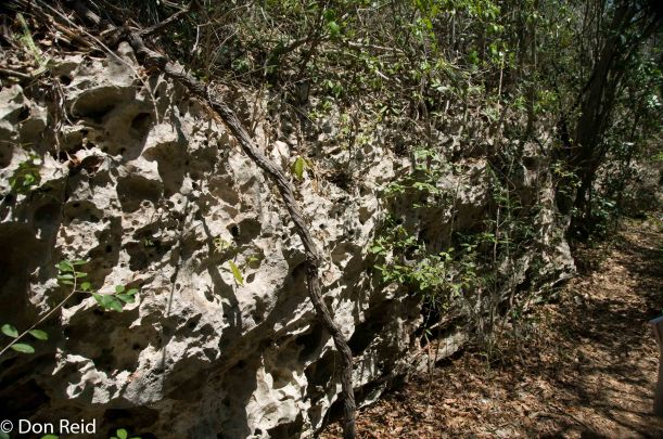 Rocks are actually ancient coral reefs