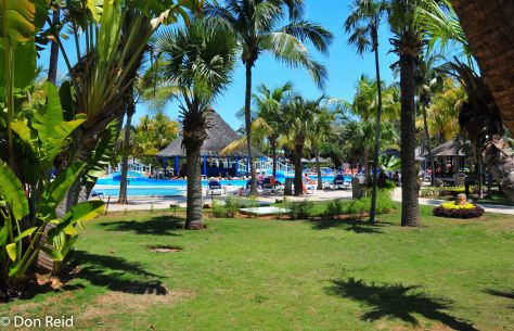 The pool area set amongst the palms