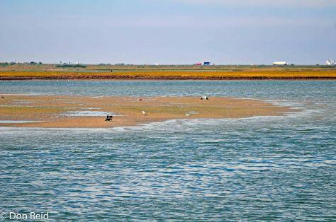 Swartkops Estuary