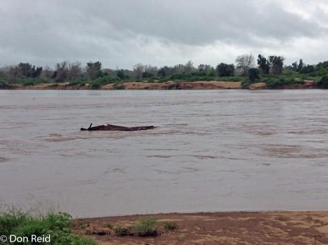 Limpopo River in flood at Crooks Corner
