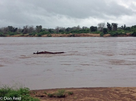 Limpopo River in flood at Crooks Corner