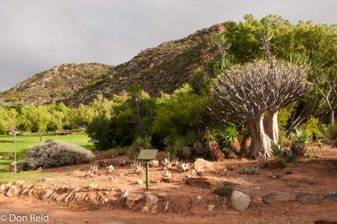 Karoo Desert Botanical Gardens, Worcester
