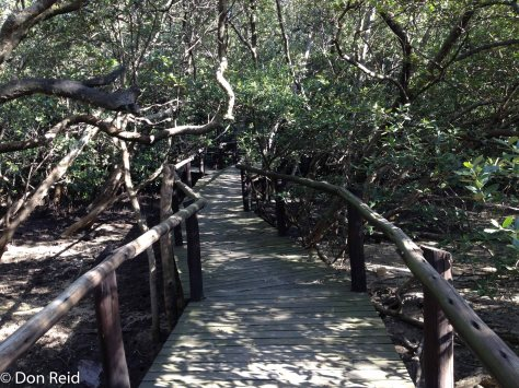 Durban Bayhead - boardwalk into the mangrove swamps