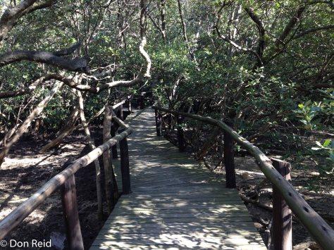 Durban Bayhead - boardwalk into the mangrove swamps