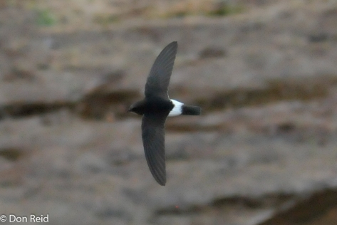 Little Swift, Luvuvhu River bridge