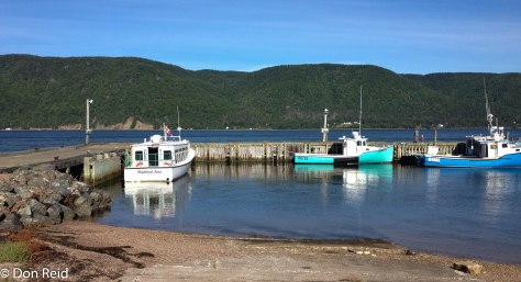 The harbour at Englishtown where we caught the boat to Bird Islands