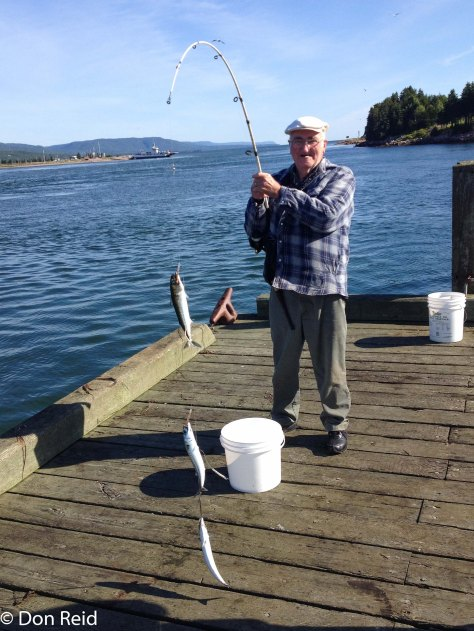 Three Mackerel in one go! A salty old fisherman at the harbour in Englishtown