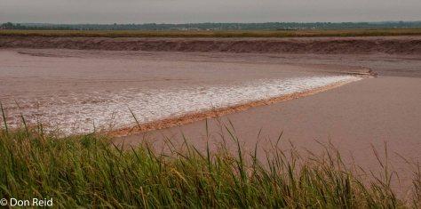 The Tidal Bore arrives at Moncton New Brunswick