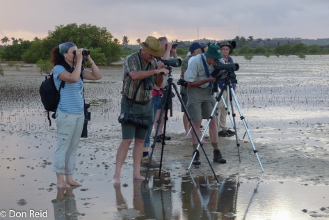 Checking the waders on Barra mudflats (Photo : Corne Rautenbach)