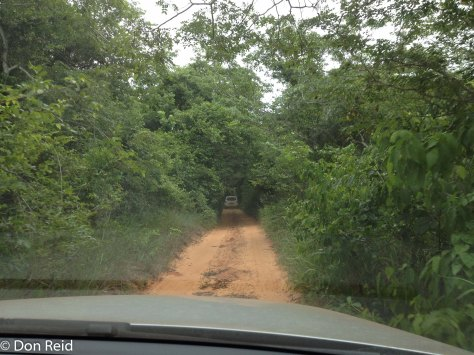 Driving a narrow track through Panda Woodland