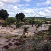 Kruger Park Birding - Pafuri and Punda Maria