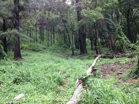 Entabeni forest - lush after good rains
