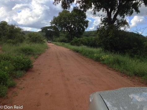 Driving the Mahonie Loop near Punda Maria