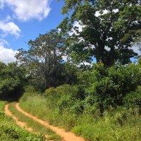 Mozambique Birding Trip : Mostly Magical (Part 2)