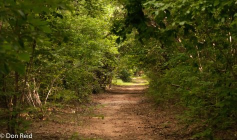 Mphingwe walk