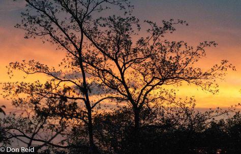 Sunset at the lek, Punda Maria