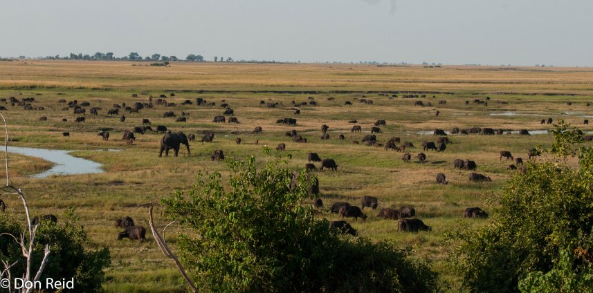 Mostly Elephant and Buffalo on the floodplain