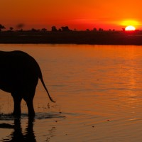Chobe National Park - The Riverfront