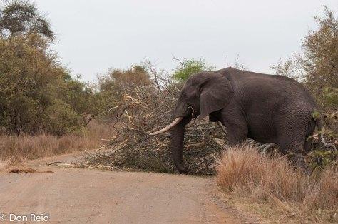 Elephant road block, Satara - Nwanetsi S100