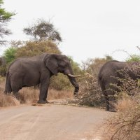 A Week in Kruger - Satara to Nwanetsi