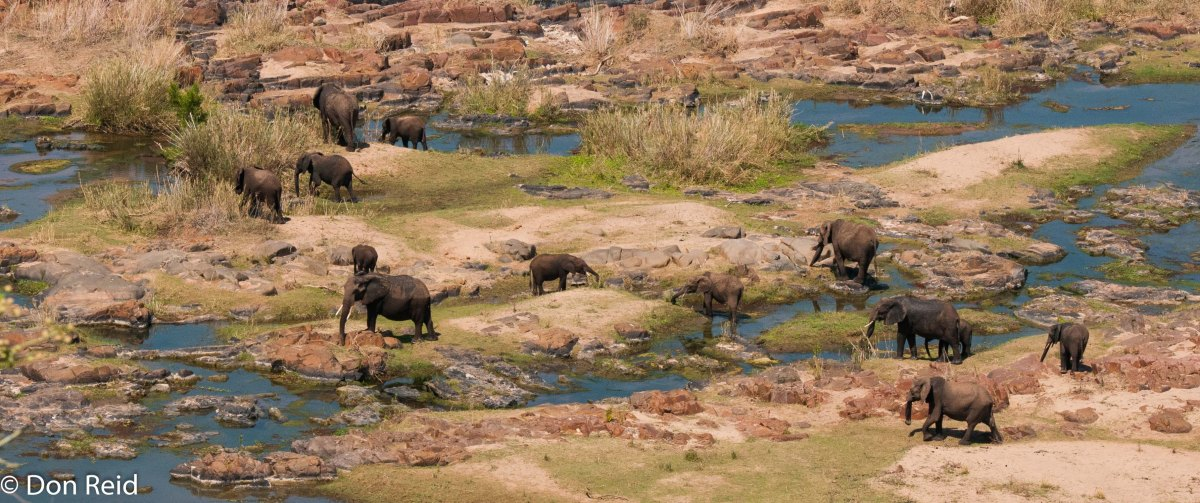 A Week in Kruger - Satara to Olifants