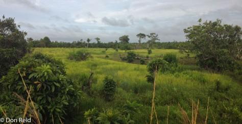 Rio Savane
