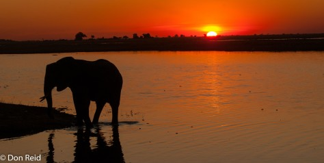 Elephant at sunset, Chobe Game Reserve