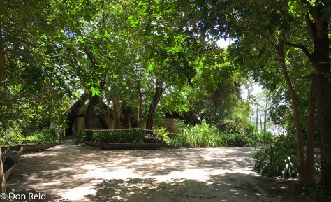 Nest site, Caprivi Houseboat Lodge