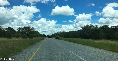 The road through Chobe