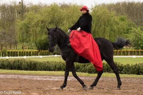 An elegant lady rider