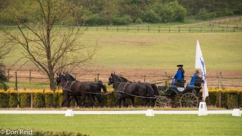 Lazar Horse farm