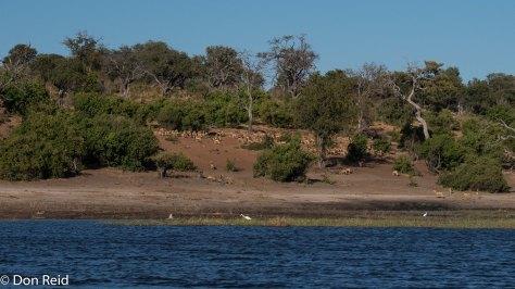 Chobe River Boat Trip